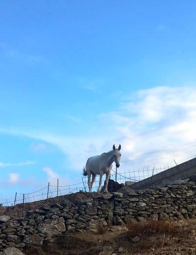 burro-pegaso