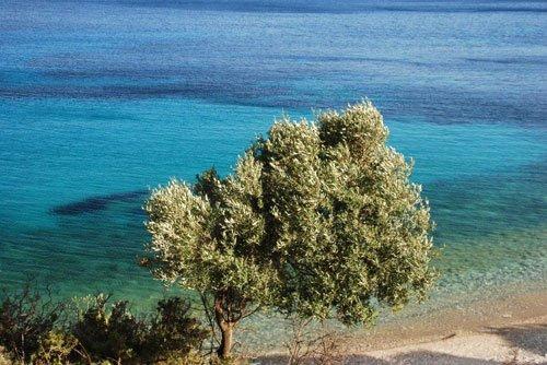 Paxos-olivo